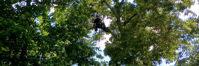 Millie Cat in a Tree Evading Rescue
